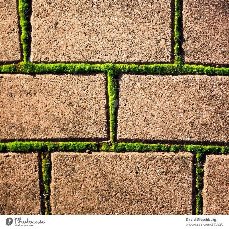 Moosige Zeiten Natur Pflanze Grünpflanze braun grün Stein Pflastersteine Rechteck Netzwerk Verbindung Raster Linie Unkraut Farbfoto mehrfarbig Außenaufnahme