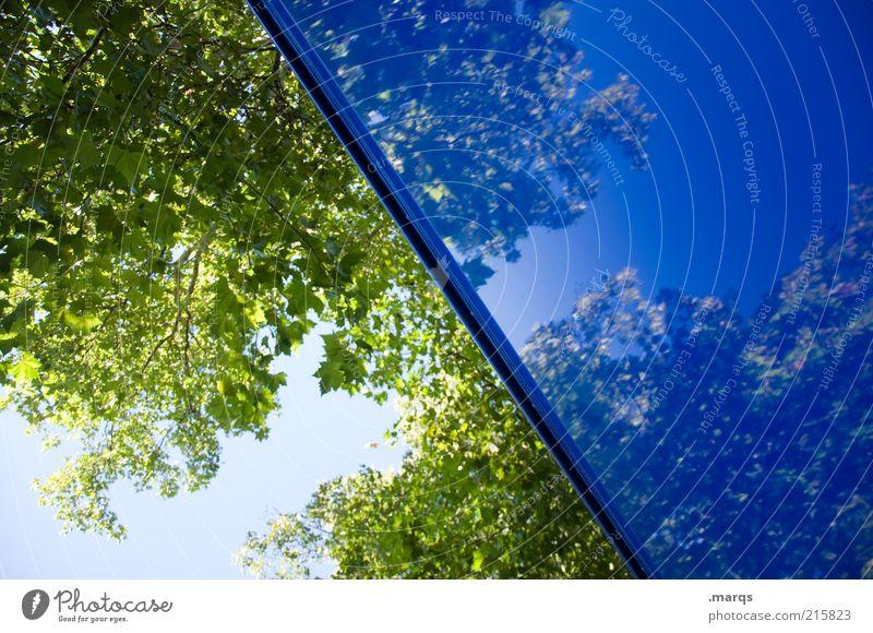 Halbe-halbe Natur schön blau Baum Blatt Farbe oben Gefühle Stil Ausflug verrückt frisch ästhetisch Perspektive Wandel & Veränderung außergewöhnlich