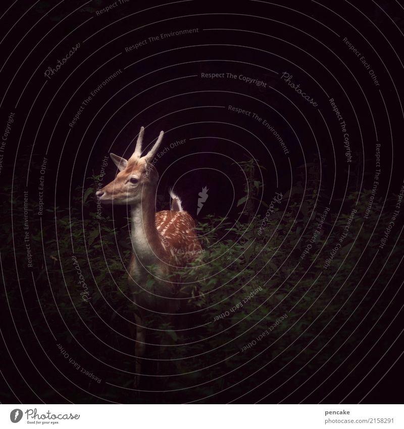 in der stille der   nacht Tier ruhig Wald dunkel wild Wildtier beobachten hören Wachsamkeit verstecken Jagd atmen Jäger Reh