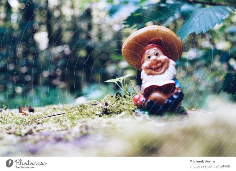 Gartenzwerg im Wald Natur Pflanze Moos Grünpflanze wandern Zwerg Gartenzwerge Farbfoto Außenaufnahme Nahaufnahme Tag