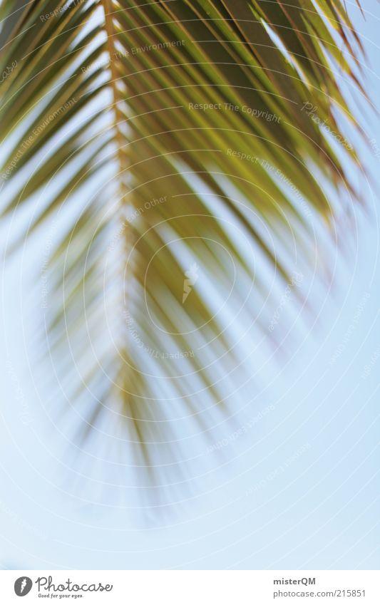 Urlaub. Himmel Natur grün Ferien & Urlaub & Reisen Pflanze Sommer Erholung Umwelt Wetter Zufriedenheit Klima Abenteuer ästhetisch Schönes Wetter heiß Palme