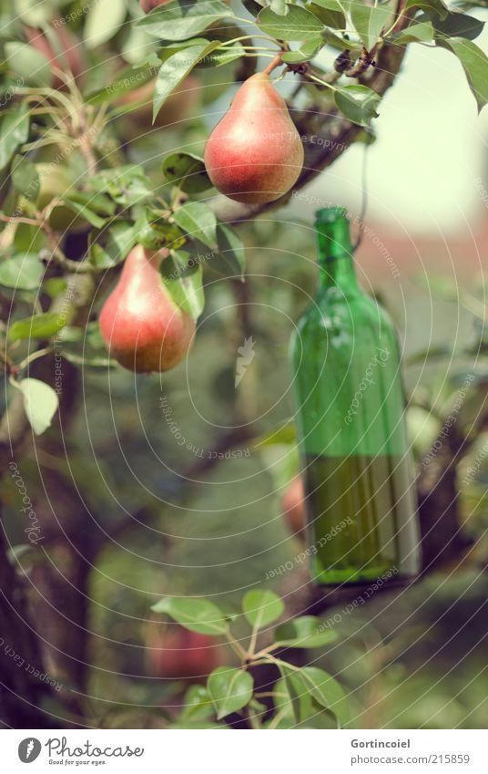 Wespenfalle Natur Baum grün Ernährung Herbst Lebensmittel Umwelt Frucht Flüssigkeit lecker Ernte Falle Schönes Wetter Bioprodukte Birne Zweige u. Äste