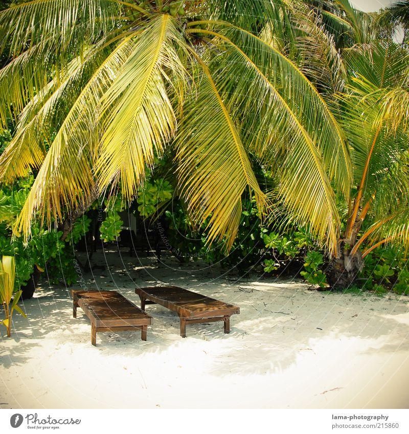 sunny days Sommer Strand Ferien & Urlaub & Reisen Erholung Insel Idylle Palme Sonnenbad exotisch Malediven Paradies Liegestuhl Sommerurlaub Kleine Antillen Grosse Antillen tropisch