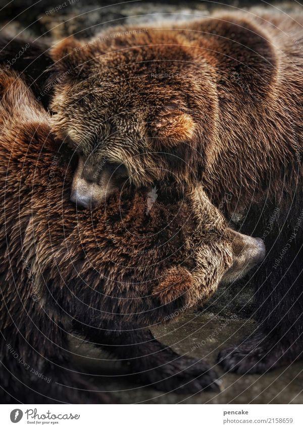 bärenstark Tier Wildtier 2 festhalten kämpfen Kommunizieren Bär Kraft Fell beißen Börse Tierpaar Farbfoto Außenaufnahme