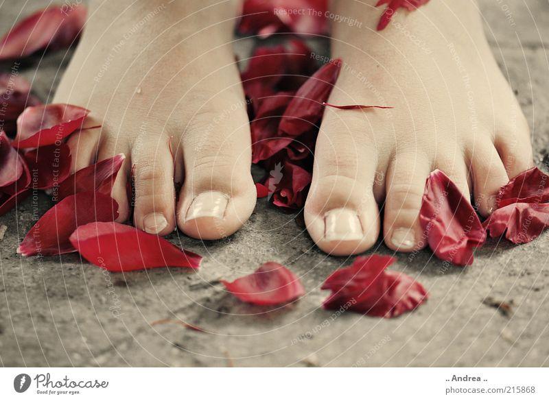 Wellness rot ruhig Erholung Leben Fuß Junge Frau Zufriedenheit liegen Rose Wohlgefühl Duft Massage harmonisch Blume Barfuß
