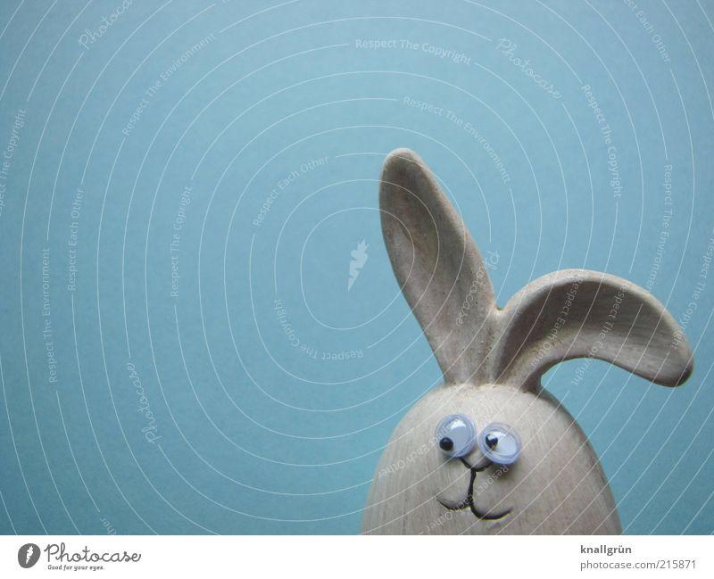 Mein Name ist Hase Tier Tiergesicht Hase & Kaninchen 1 beobachten Blick Freundlichkeit blau grau Gefühle Freude Erwartung Frohe Ostern Osterhase Feiertag
