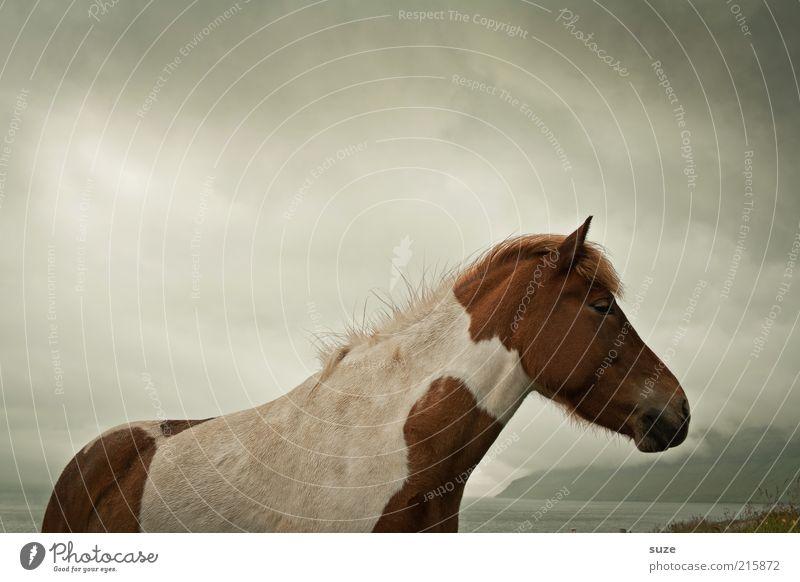 Bei Wind und Wetter Himmel Natur weiß Tier Wolken dunkel braun Stimmung natürlich Wind Wildtier wild warten stehen ästhetisch Pferd