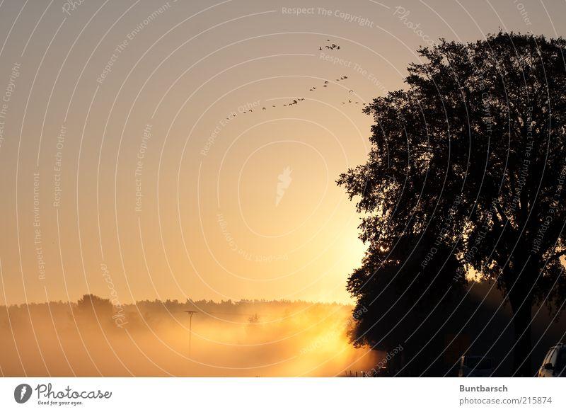 Morgenstund hat Gold im Mund Natur Wolkenloser Himmel Sonnenaufgang Sonnenuntergang Sonnenlicht Herbst Wetter Nebel Wald Verkehr Straßenverkehr Vogel Schwarm