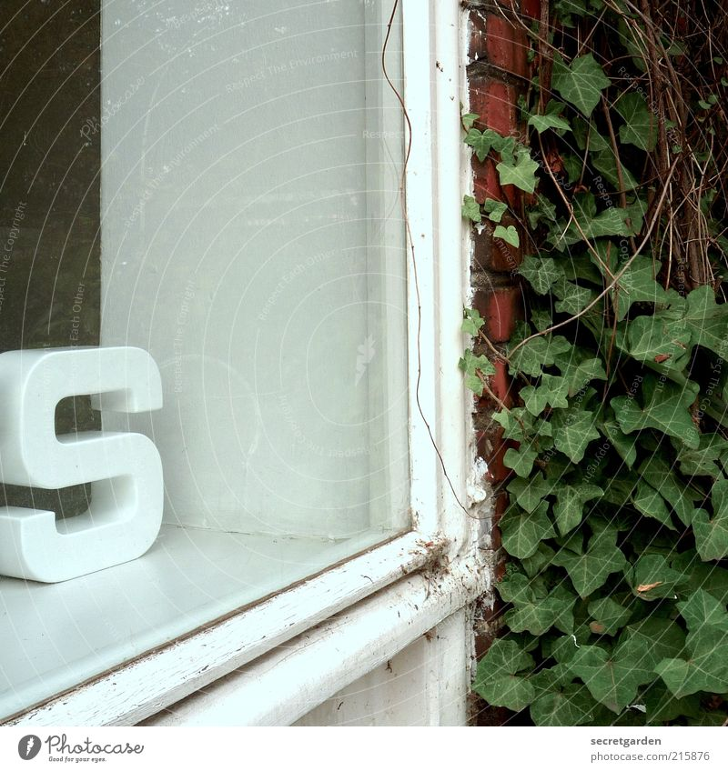 [HH 10.01] s wie s ex oder wie s chneckentempo? Häusliches Leben Wohnung Dekoration & Verzierung Efeu Mauer Wand Fassade Schaufenster Schriftzeichen grün weiß