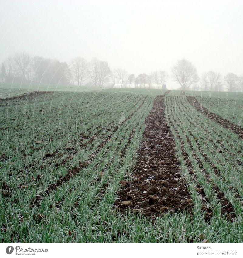 Kälte hängt über dem Land Natur Baum Pflanze kalt Gras Landschaft Eis Feld Nebel Umwelt Erde Frost Klima frieren Ackerbau Biologische Landwirtschaft