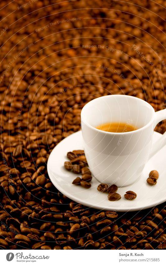 Espresso Getränk Heißgetränk Kaffee Geschirr Tasse Duft trinken Flüssigkeit lecker braun weiß Durst Genusssucht genießen Pause rein Farbfoto Studioaufnahme