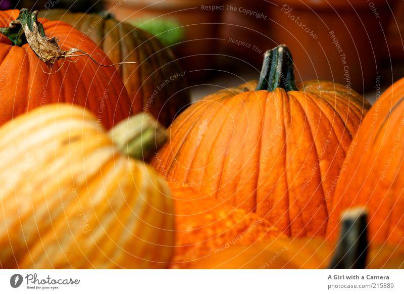 Gruselgemüse Herbst orange Gesundheit Lebensmittel frisch mehrere Dekoration & Verzierung fest Stengel Gemüse dick Ernte viele Bioprodukte Halloween ländlich