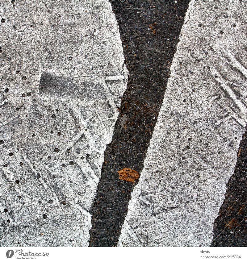 [HH10.1] - Lebenslinien #18 Blatt Straße Farbe grau Farbstoff Linie Bodenbelag trist Asphalt heiß Fußspur Reifenprofil Straßenbelag Teer Straßenverkehr
