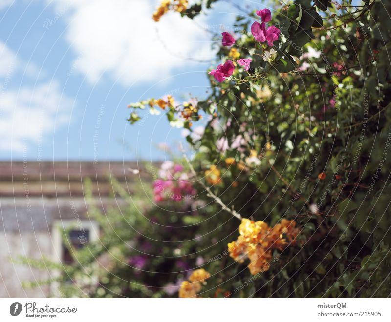 Hinterhofromantik. Himmel Blume grün Pflanze Sommer Ferien & Urlaub & Reisen ruhig Haus Wolken Garten Zufriedenheit rosa Fassade ästhetisch Wachstum Romantik