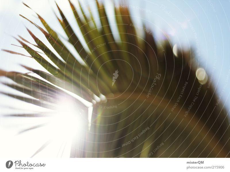 Sunshine Feeling. Natur Pflanze ästhetisch Zufriedenheit Palme Palmenwedel Palmenstrand Ferien & Urlaub & Reisen Urlaubsstimmung Urlaubsfoto Urlaubsort Sommer
