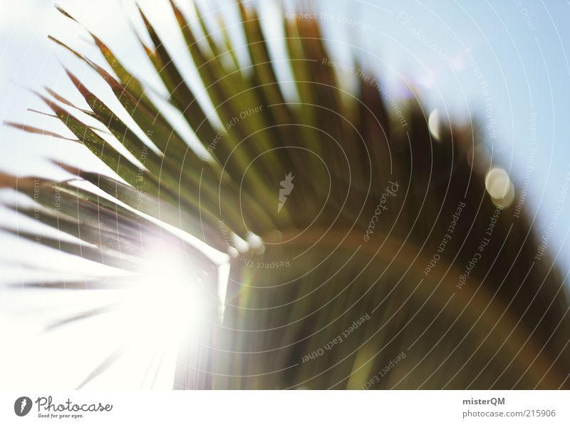 Sunshine Feeling. Natur Pflanze Sommer Ferien & Urlaub & Reisen ruhig Erholung Zufriedenheit ästhetisch Tourismus Reisefotografie Freizeit & Hobby Muster Palme