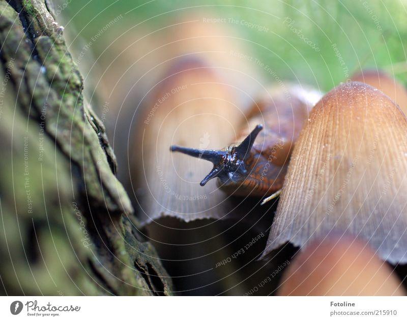 Wohnungsbesichtigung? Natur grün Baum Pflanze Tier Umwelt Herbst hell braun Wildtier natürlich Baumstamm Pilz Schnecke krabbeln Baumrinde
