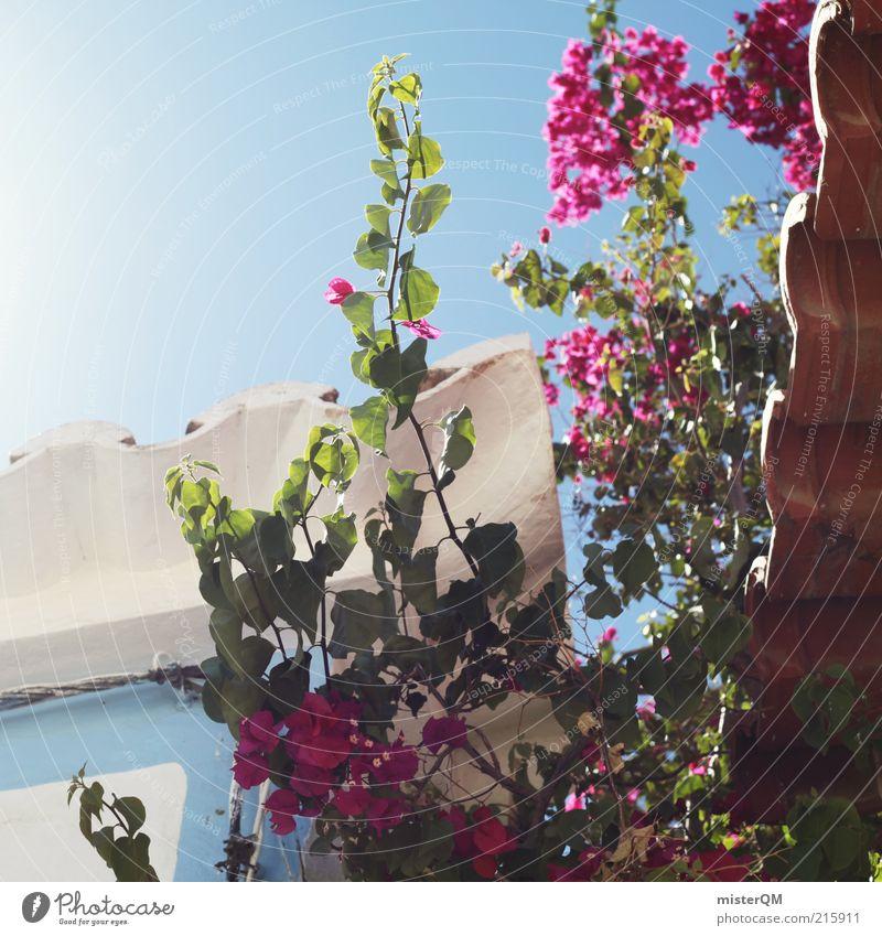 Idylle. blau Ferien & Urlaub & Reisen schön Sommer Blume Erholung Blüte Garten Wachstum ästhetisch Dach Schönes Wetter Romantik Blühend Gasse
