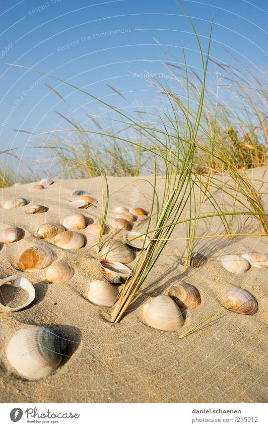Muscheln suchen Natur Himmel Pflanze Sommer Strand Ferien & Urlaub & Reisen Erholung Sand Küste Wind Insel Tourismus Düne Schönes Wetter Muschel Blauer Himmel