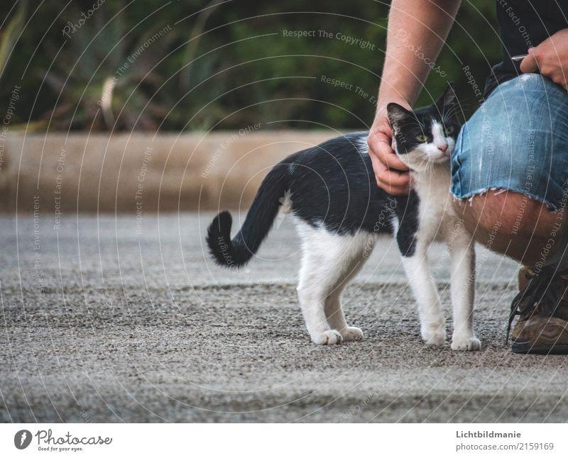 Katzensprache Spielen Mensch maskulin Mann Erwachsene Freundschaft Körper Hand Beine 1 Umwelt Tier Garten Haustier Tiergesicht Fell Pfote Kraulen Duft
