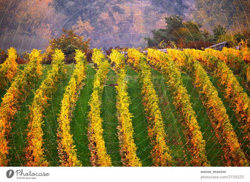 Bunter Herbst in den Weinstöcken, Österreich Natur Ferien & Urlaub & Reisen Pflanze grün Landschaft Baum rot Blatt Berge u. Gebirge gelb Garten Tourismus