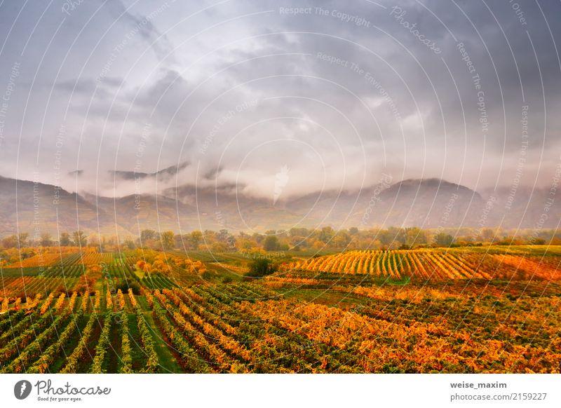 Panorama des Wachautales. Bunter Herbst in den Weinbergen Himmel Natur Ferien & Urlaub & Reisen Pflanze grün Landschaft Baum rot Blatt Wolken Ferne