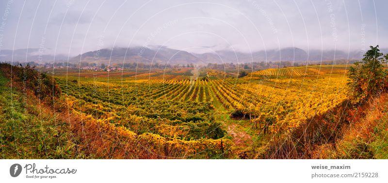 Panorama des Wachautales. Bunter Herbst in den Weinbergen Himmel Natur Pflanze grün Landschaft Baum rot Blatt Wolken Berge u. Gebirge gelb Garten Tourismus