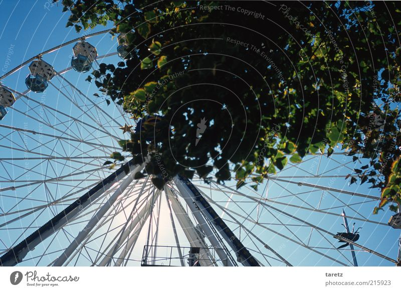 Baum Freude Blatt Zeit leer rund Jahrmarkt Marktplatz Blauer Himmel Strebe Riesenrad Zweige u. Äste gewaltig Belgien Fahrgeschäfte Blätterdach