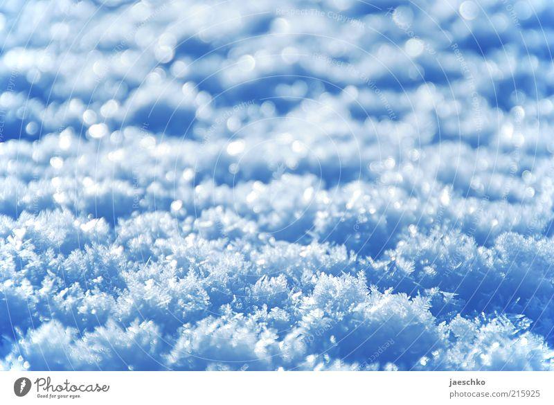 Zugedeckt weiß blau Winter kalt Schnee Eis frisch Frost Kristallstrukturen Schneeflocke Textfreiraum Neuschnee Schneekristall Schneedecke