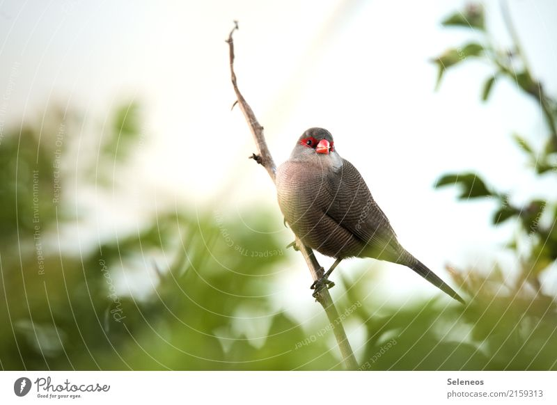 Superhero Natur Sommer Tier Blatt Ferne Umwelt natürlich klein Garten Freiheit Vogel Park Wildtier Sträucher Ast nah
