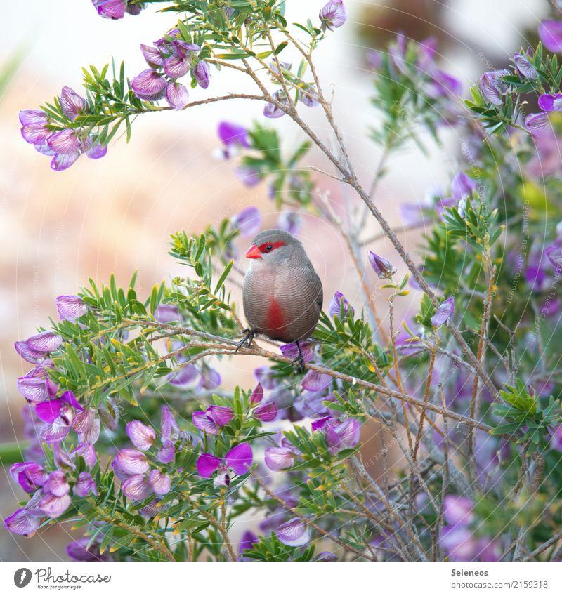mit Faschingsmaske Sommer Umwelt Natur Frühling schlechtes Wetter Baum Blume Blatt Blüte Garten Park Tier Wildtier Vogel Tiergesicht 1 klein nah natürlich