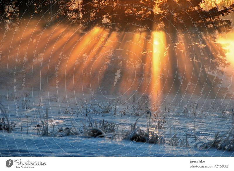 Kitsch im Winterwald Sonnenlicht Klima Klimawandel Eis Frost Schnee Wiese Wald ästhetisch außergewöhnlich hell kalt natürlich Wärme Romantik Natur schmelzen
