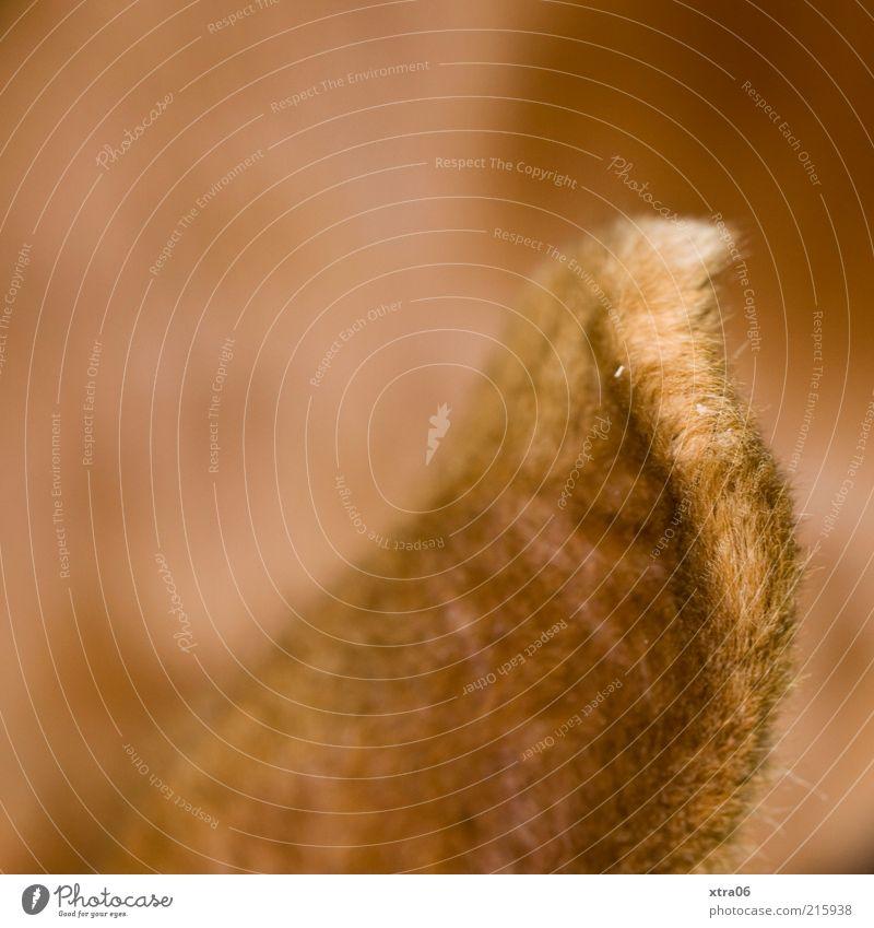 kuschlig Tier Haustier Nutztier 1 Ohr Fell niedlich Farbfoto Außenaufnahme Textfreiraum oben Hase & Kaninchen weich Textfreiraum links Menschenleer