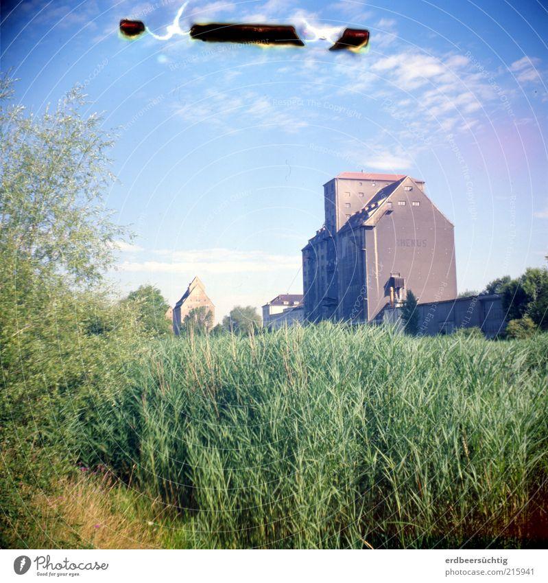 Hafen im Grün Ausflug Expedition Natur Pflanze Himmel Wolken Gras Sträucher Flussufer Kanal Schilfrohr Leipzig Hafenstadt Stadtrand Menschenleer Hochhaus