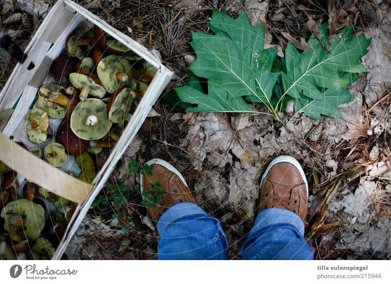 von Jägern und Sammlern Mensch Natur Blatt Umwelt Herbst Fuß Erde Schuhe Freizeit & Hobby Ausflug stehen Suche Jeanshose Sammlung Pilz Kiste