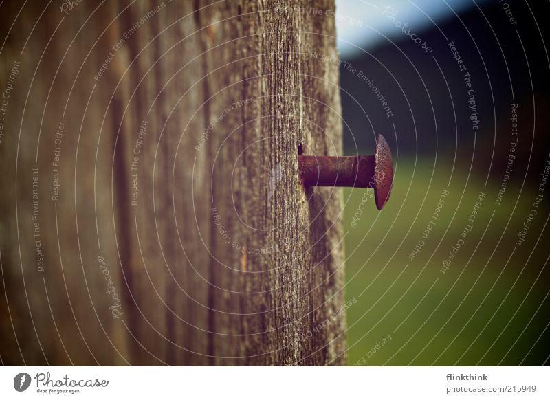 Ein Nagel mit Kopf alt grün Sommer Umwelt Holz braun Hügel Rost Eisen Holzbrett Schraube Nagel Maserung Holzwand sparsam mehrfarbig