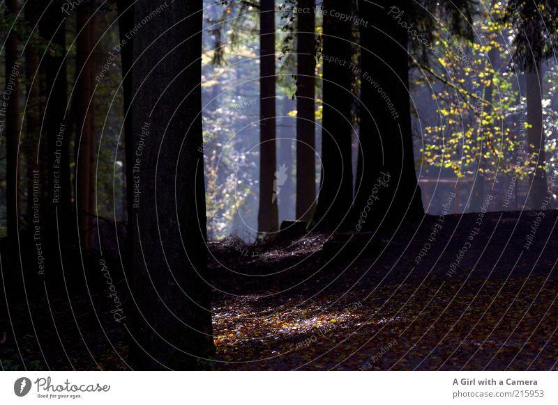 a walk in the woods Natur grün Baum Pflanze Blatt schwarz ruhig Wald Umwelt kalt Herbst Zufriedenheit leuchten Sauberkeit Hügel Idylle