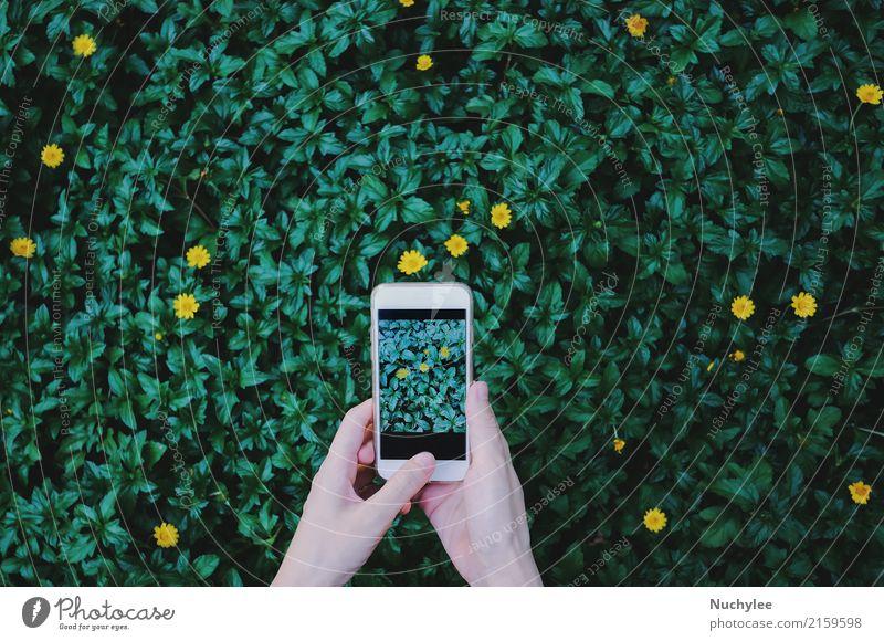 Foto von Blumen auf Grünpflanze nehmen Lifestyle Freude schön Freizeit & Hobby Garten Telefon PDA Bildschirm Fotokamera Technik & Technologie Mensch Frau