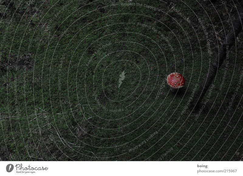 Bestandteil einer Serie dunkel bedrohlich Baumstamm Pilz Moos gepunktet Warnfarbe Fliegenpilz