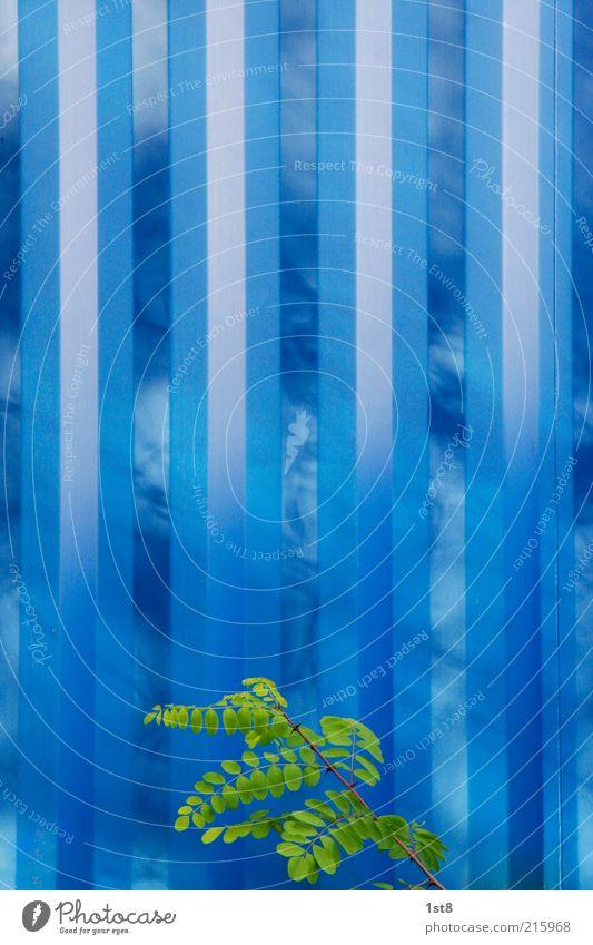 blue box blau Pflanze Wand Mauer Design elegant Industrie Energiewirtschaft ästhetisch Zukunft Technik & Technologie Sträucher Klima Streifen Unendlichkeit