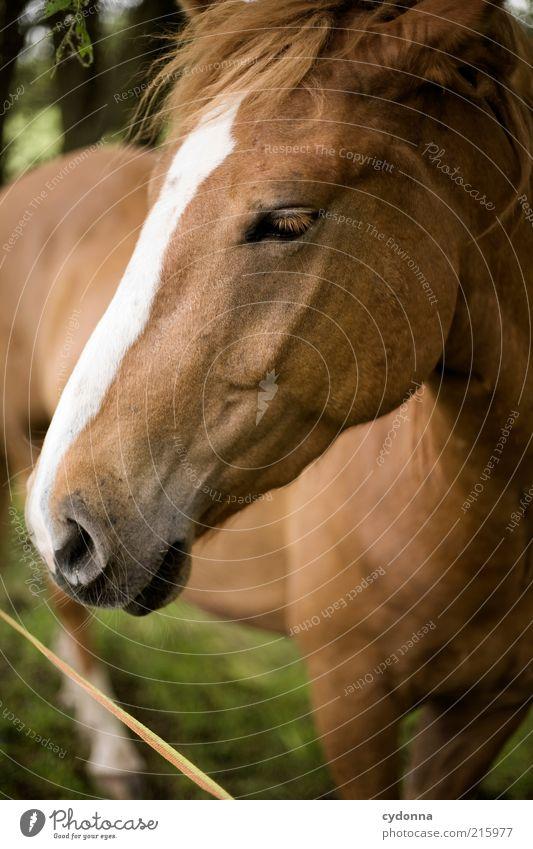 Pferdefoto schön ruhig Auge Tier Leben ästhetisch nah Tiergesicht einzigartig Fell Mähne Tierliebe Nüstern bräunlich