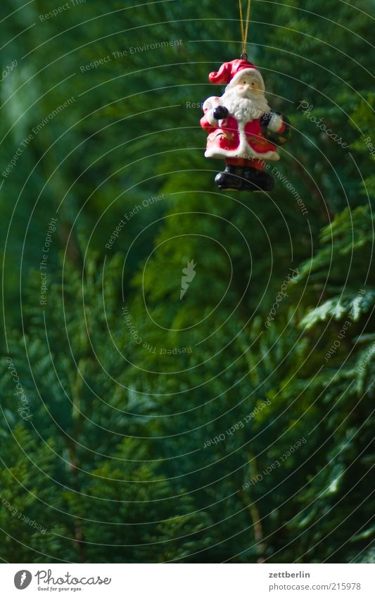 Der Weihnachtsmann gehört zu Deutschland Feste & Feiern Natur Pflanze Grünpflanze Weihnachtsbaum Weihnachtsdekoration Dekoration & Verzierung Hecke Konifere