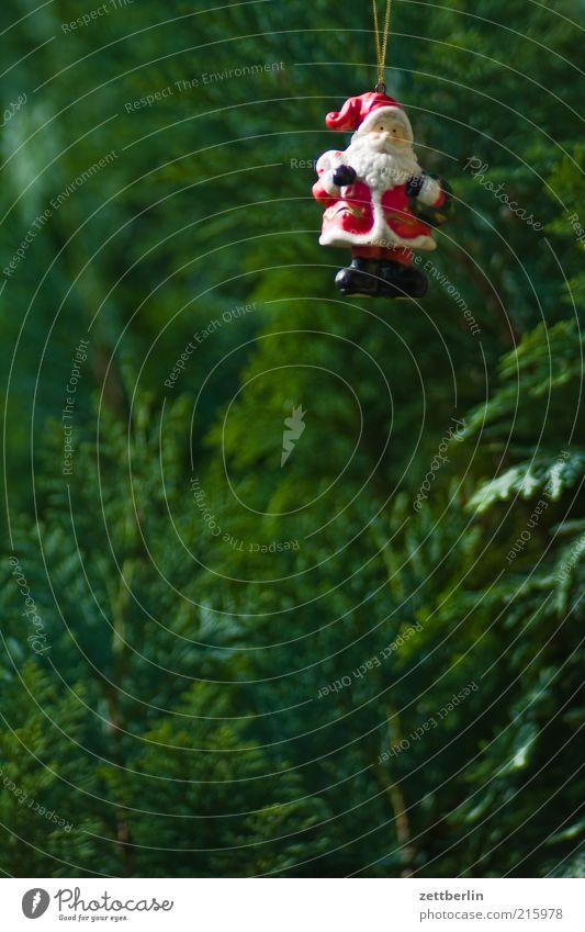 Der Weihnachtsmann gehört zu Deutschland Natur Weihnachten & Advent Pflanze Feste & Feiern Dekoration & Verzierung Tradition Bart Weihnachtsbaum Schmuck hängen Tanne Weihnachtsmann Christentum Grünpflanze Weihnachtsdekoration Hecke