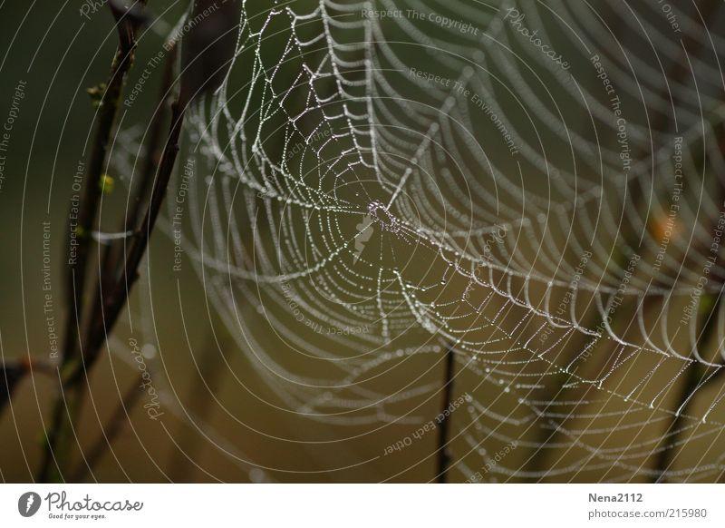 Vernetzt Natur Wasser Wassertropfen Wetter Regen Netz Tropfen nass braun weiß Spinnennetz netzartig feucht Tau Nahaufnahme Detailaufnahme leicht Farbfoto