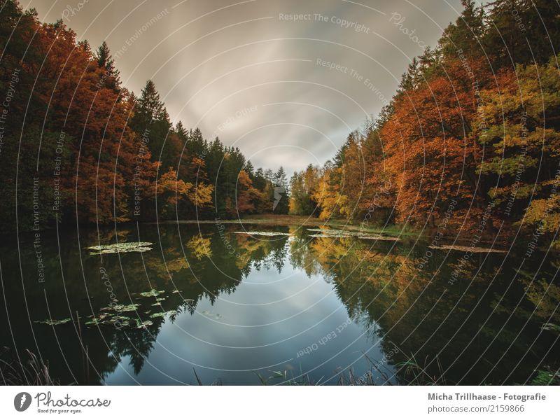 Die Farben des Herbstes Umwelt Natur Landschaft Pflanze Wasser Himmel Wolken Sonne Sonnenlicht Wetter Baum Sträucher Blatt Wald Seeufer Teich Erholung leuchten