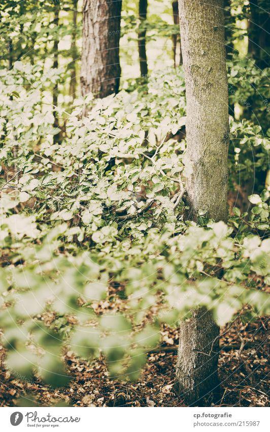 im Wald Umwelt Natur Pflanze Sommer Herbst Schönes Wetter Baum natürlich Tag Licht Schatten Schwache Tiefenschärfe Baumstamm Sträucher Menschenleer grün Blatt