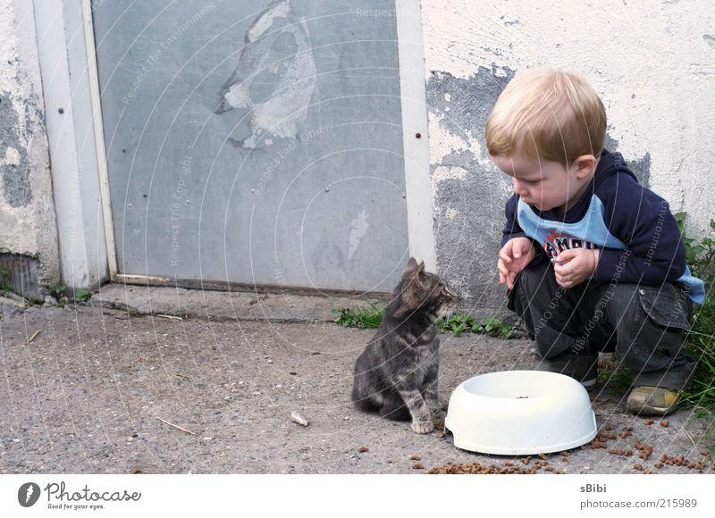 Liebe auf den 1.Blick Teil 1 Mensch Kind Kleinkind Junge Kindheit 1-3 Jahre Bauernhof blond Katze Fell Tier Tierjunges füttern hocken Spielen klein Neugier