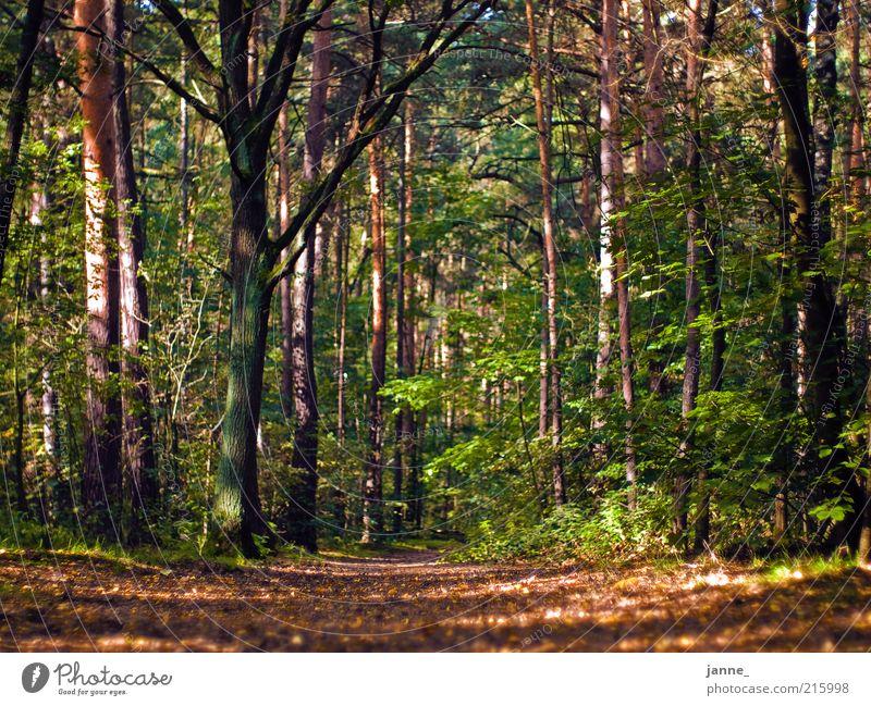 Wald Umwelt Natur Pflanze Erde Herbst Baum Blatt braun mehrfarbig grün Farbfoto Außenaufnahme Tag Licht Schatten Sonnenlicht Froschperspektive herbstlich