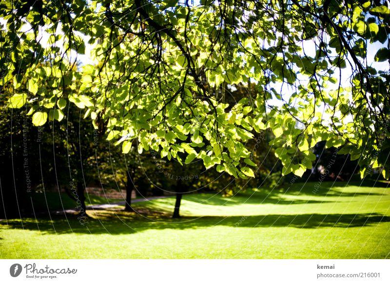 Unterm Baum Umwelt Natur Landschaft Pflanze Himmel Sonnenlicht Sommer Klima Schönes Wetter Gras Grünpflanze Wildpflanze Ast Zweig Park Wiese leuchten Wachstum