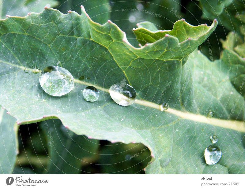 Regentropfen Wasser Blatt Wassertropfen